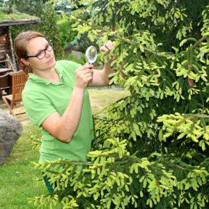 Lausitzer Pflanzendoktor